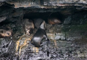 Seals have many good resting places