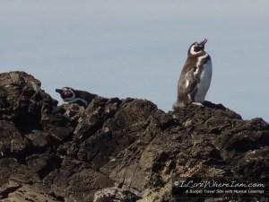 Penguin Colony on Chiloe