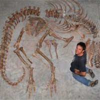 Dinosaur fossils as illicit heritage