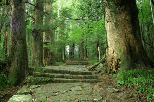 熊野古道(くまのこどう)の画像