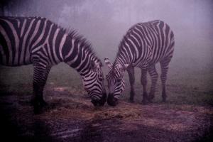 九州自然動物公園アフリカンサファリの画像