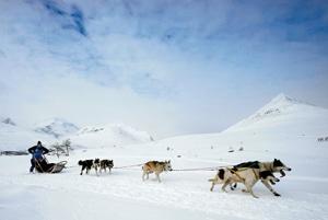 Nystart för Fjällräven Polar – hundspannsäventyr i arktisk vildmark