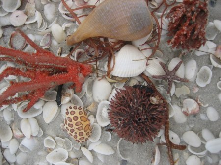 Crab shell, Purple Urchin, Fig and Sponge