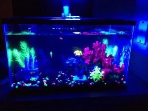 Glowfish Tank
