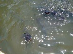 Here fishy fish!