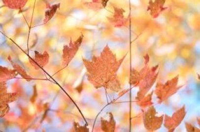 colores del otoño caen Foto Gratis
