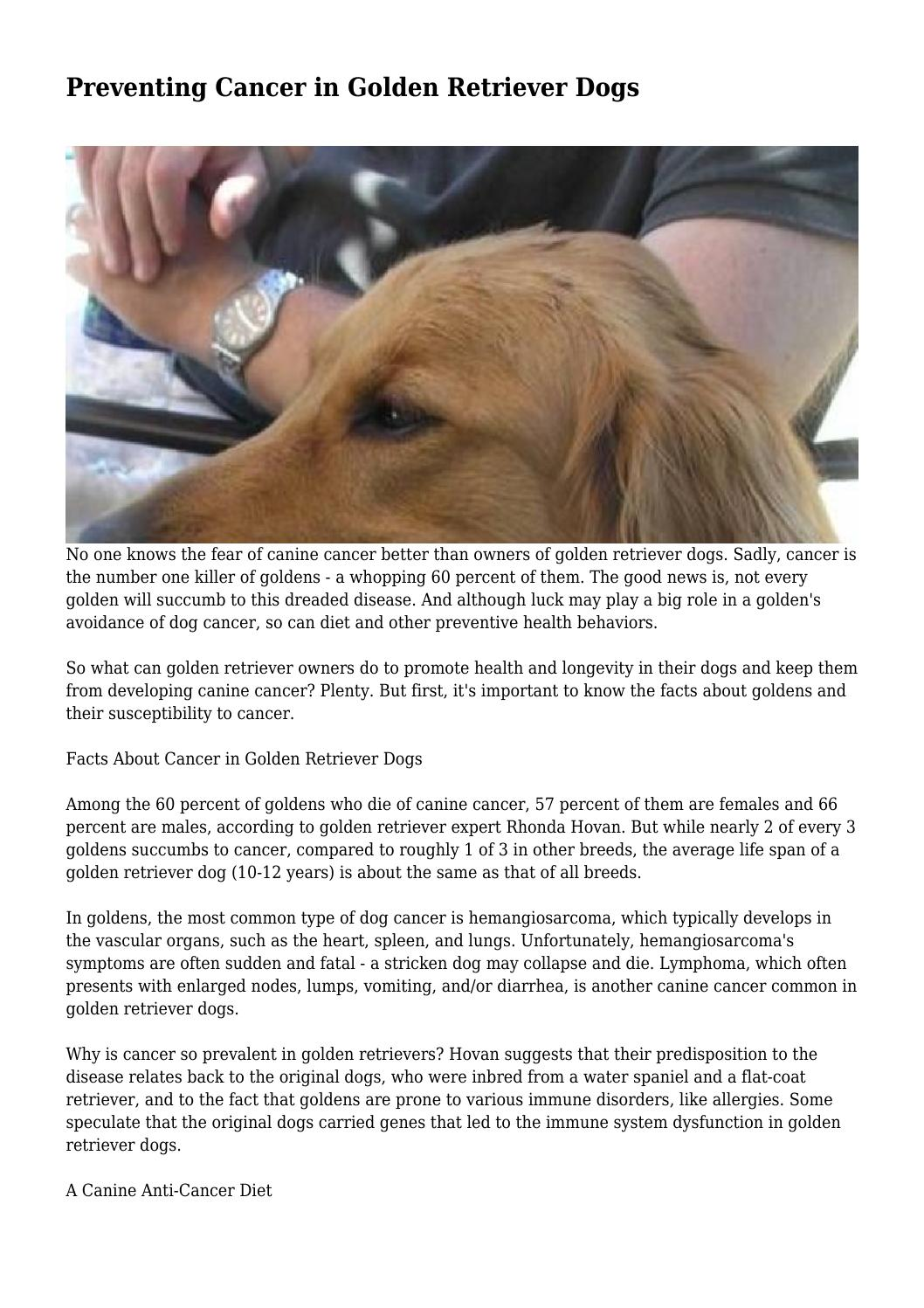 Fantastic Preventing Cancer Gen Retriever Dogs By Tracy Issuu Preventing Cancer Gen Retriever Dogs By Tracy Gen Retriever Facts Akc Gen Retriever Facts Uk bark post Golden Retriever Facts