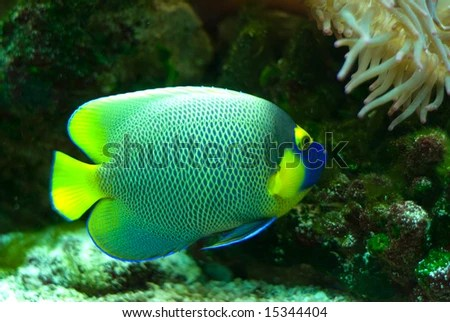 Names Of Colorful Saltwater Fish A colorful marine fish with a