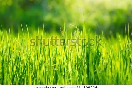Green Background Hd For Picsart Baik Bag