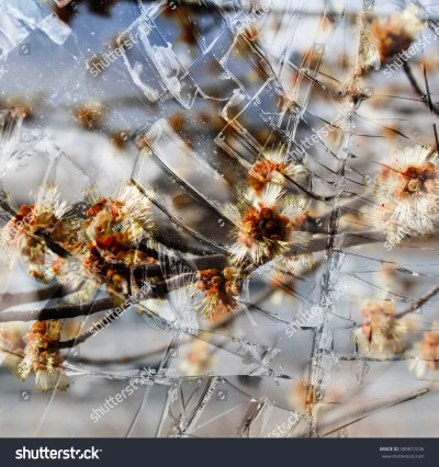Abstract Spring Flowers Background Through Glass Stock Photo 589872236 - Shutterstock