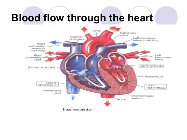 The order in which impulses travel through heart is quizlet anexa the order in which impulses travel through heart is quizlet anexa ccuart Image collections