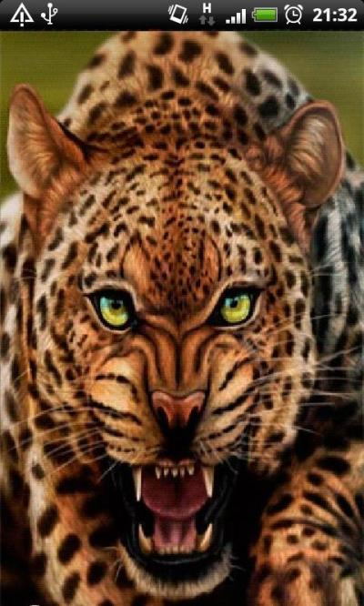 Leopard Live Wallpaper APK Download - Free Personalization APP for Android | APKPure.com