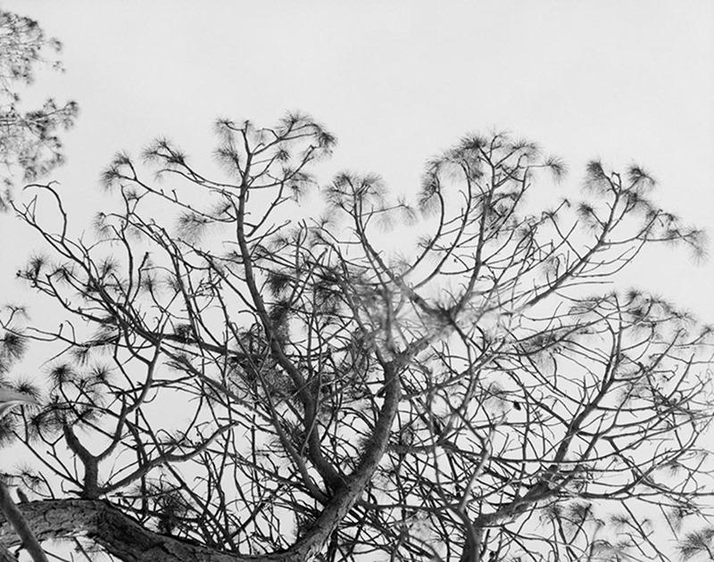 L'OFFICIEL HOMMES ITALIA Theo Neilson, Nick Fortna & Malik Jalloh by Laurence Ellis. Anders Solvsten Thomsen, Fall 2016, www.imageamplified.com, Image Amplified3