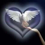 imagenes cristianas de palomas (5)