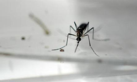 Segundo os autores, o estudo foi o primeiro a mostrar a ação do composto no vírus da zika / Foto: AFP