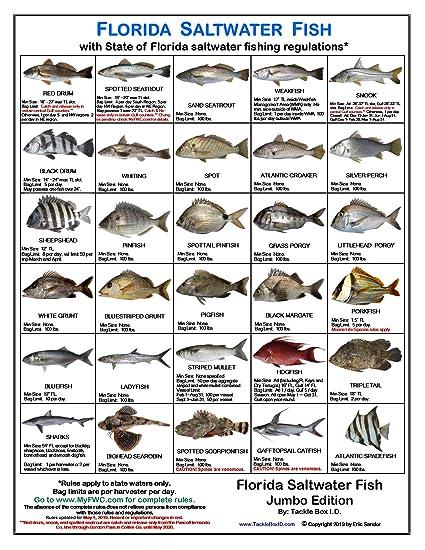 Florida Saltwater Fish Identification