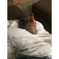 Small Crop Of Dog Acting Weird