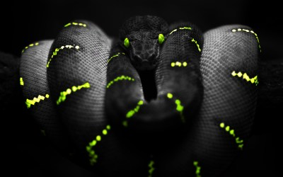 275 Snake HD Wallpapers | Backgrounds - Wallpaper Abyss