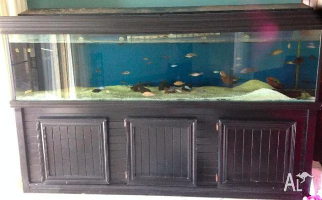 Fish Tank 8ft Plus Stand, Filter, Fish etc for Sale in ADVANCETOWN