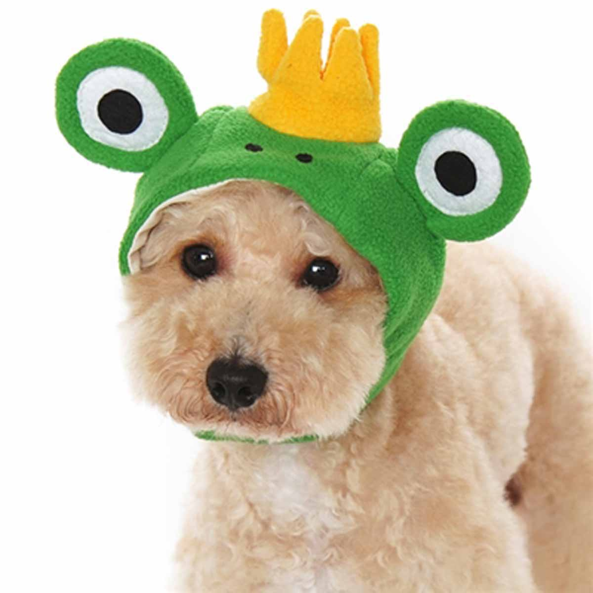 First Prince Frog Dog Hat By Dogo Prince Frog Dog Hat By Dogo Baxterboo Dogs Hats Instagram Dogs Hats Wallpaper bark post Dogs In Hats