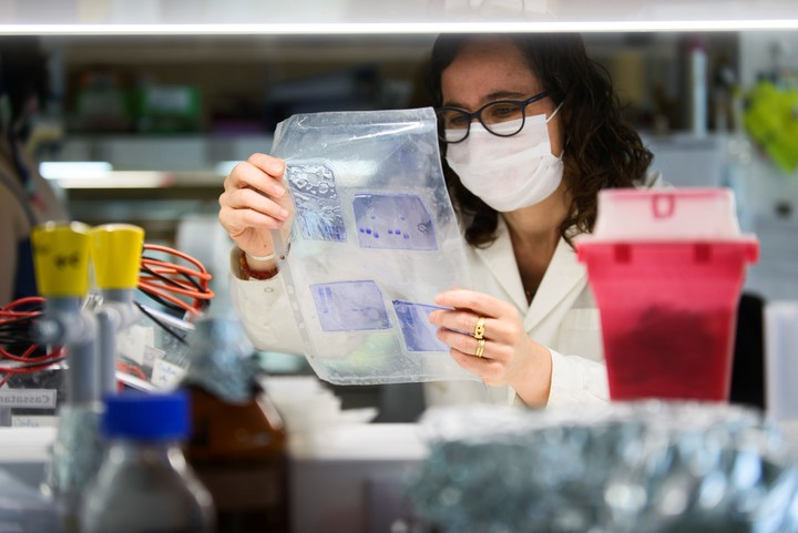 La bioquímica Karina Pasquevich sostiene un gel de acrilamida que se usa para identificar las proteínas del coronavirus. Foto: Andrés D'Elía.