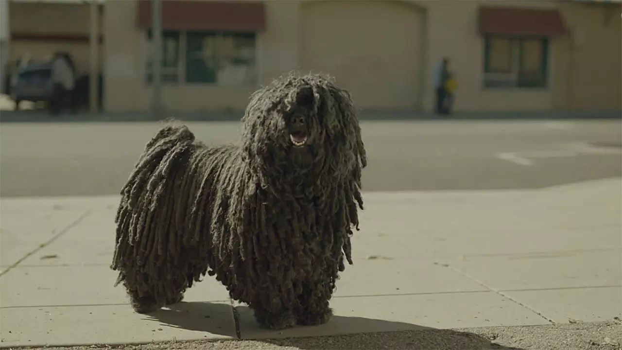 Fullsize Of Dog That Looks Like A Mop