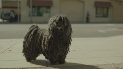 Tremendous New Ad Puppy That Looks Like A Mop Big Dog That Looks Like A Mop An Mop Dog Stars