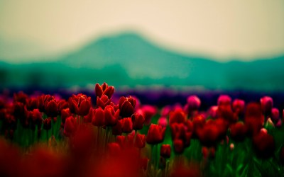 20+ Tumblr Flower Backgrounds   Wallpapers   FreeCreatives