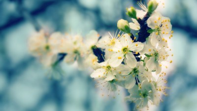 28+ Spring Wallpapers, Backgrounds, Images | FreeCreatives
