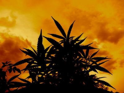 21+ Weed Wallpapers, Backgrounds, Images | FreeCreatives
