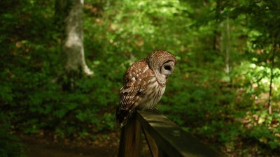 20+ Owl Wallpapers, Backgrounds, Images | FreeCreatives