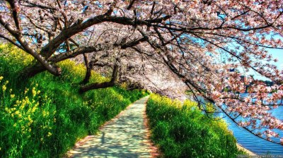 22+ Spring Nature Wallpapers, Backgrounds, Images | FreeCreatives
