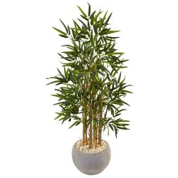 Small Crop Of Bamboo House Plant