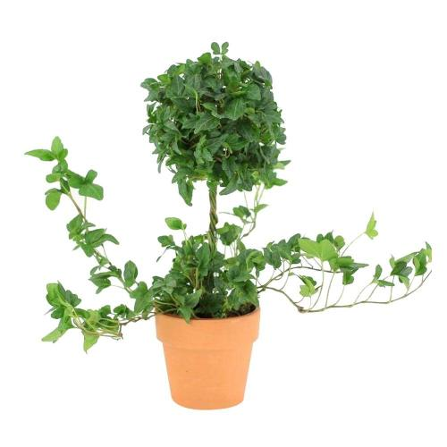 Medium Of Home Depot House Plants