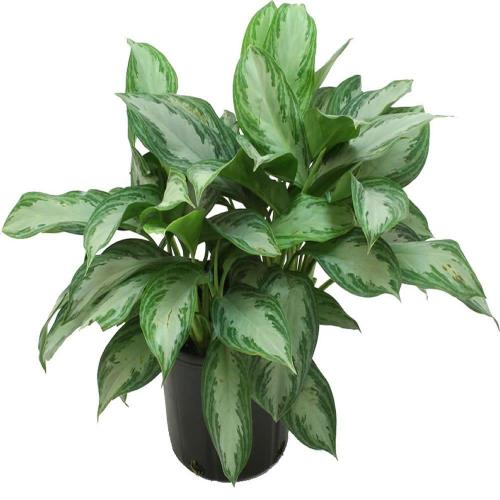 Medium Of Home Depot House Plants