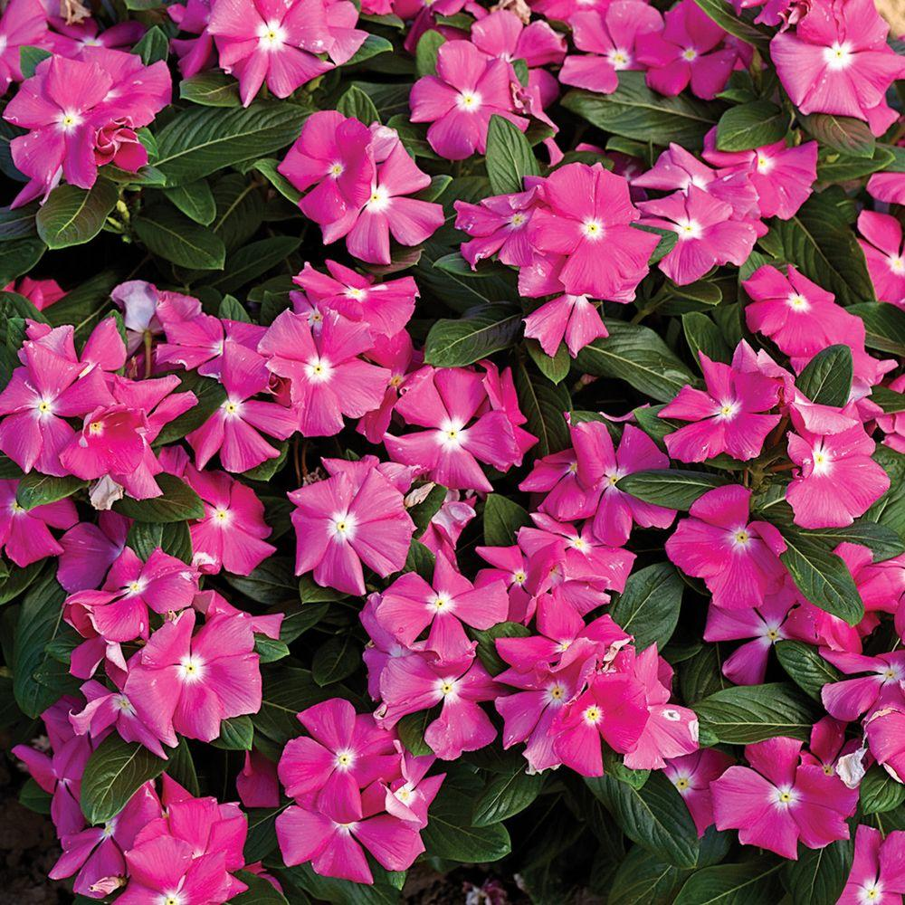 Fullsize Of Home Depot Gardening Center Plants