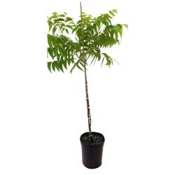 Small Of Home Depot Fruit Trees