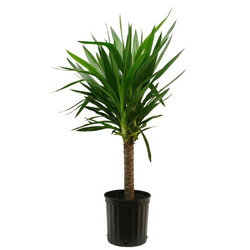 Large Of Home Depot House Plants