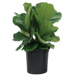 Small Of Home Depot House Plants