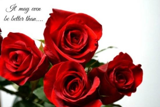2014-12-07-roses570.jpg