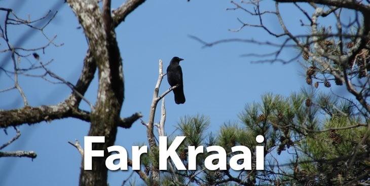 FarKraai