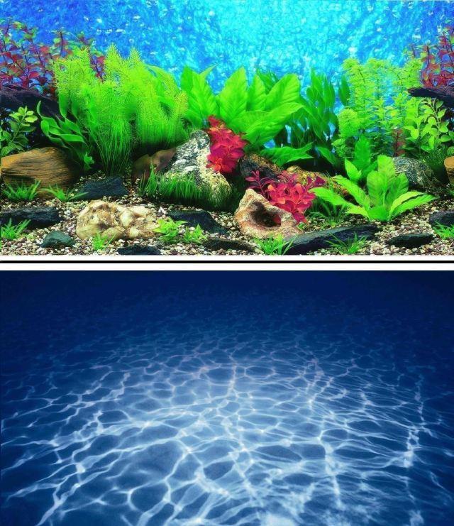 Aquarium Background Backdrop Fish Tank Reptile Vivarium Marine   eBay