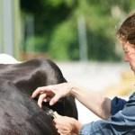 mecicina-veterinaria
