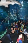 http://i2.wp.com/images.mapsofworld.com/allwonders/2015/05/Siam-Ocean-World.jpg?fit=100%2C150