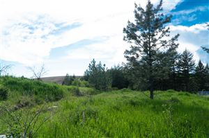 Photo of TBD Stolte Canyon Road, Peck, ID 83501 (MLS # 134605)