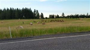 Photo of 43975 HWY 129, Anatone, WA 99401 (MLS # 134994)