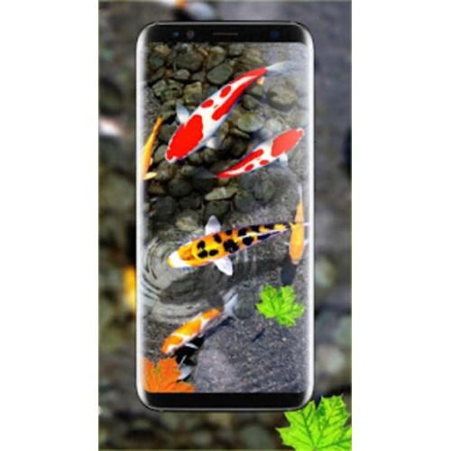 Medium Crop Of Koi Fish Wallpaper