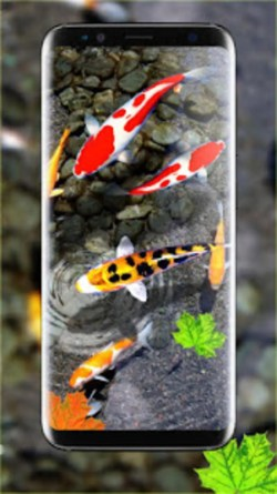 Small Of Koi Fish Wallpaper