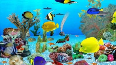 Dolphins Aquarium - Download