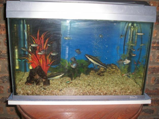 Tropical Aquariums/Fish Tanks for Sale in Boksburg, Gauteng Classified